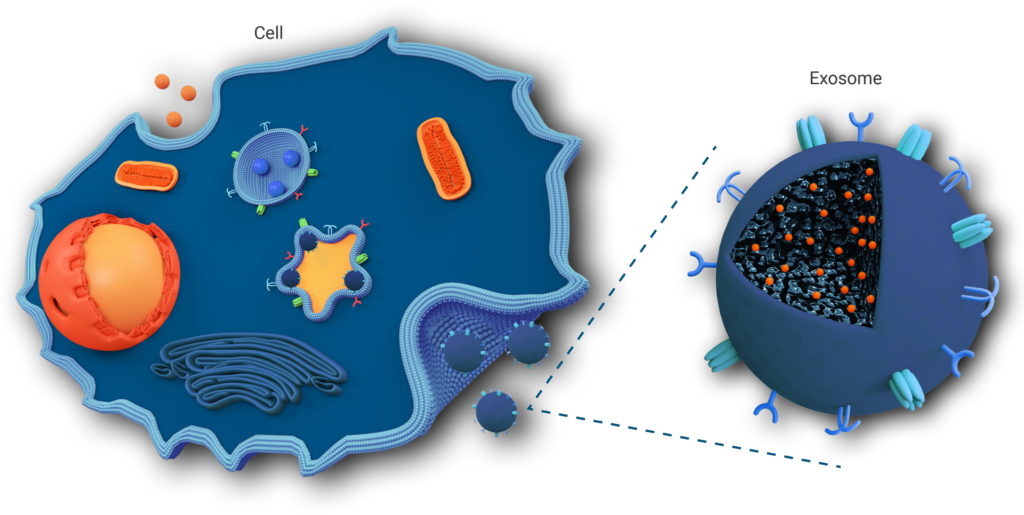 Cell and Exosome